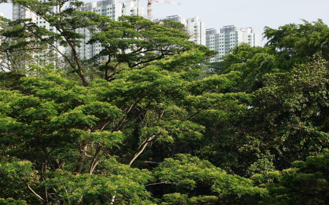 Can greenspace exposure improve pain outcomes?
